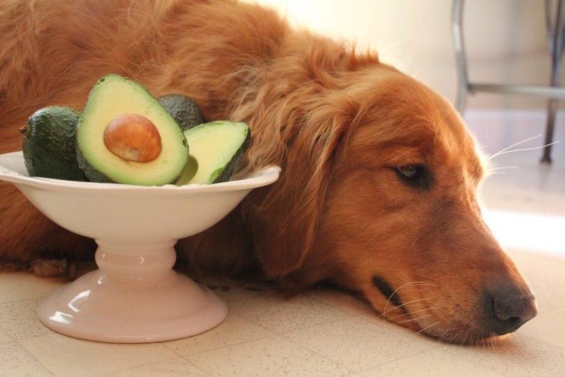"""Résultat de recherche d'images pour """"avocado dog"""""""