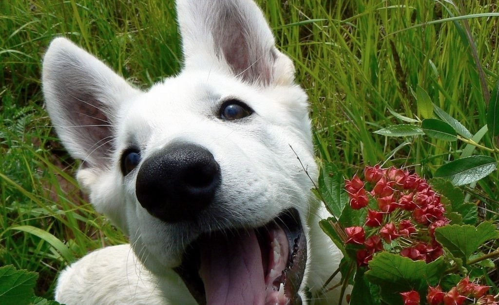 Can Dogs Get Stung By Bees