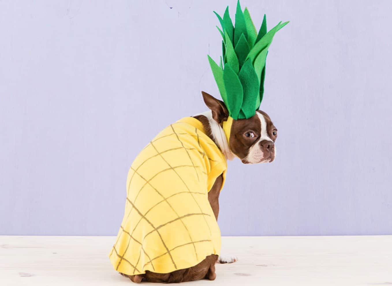 Pineapples have been known to treat several dog diseases and illnesses.