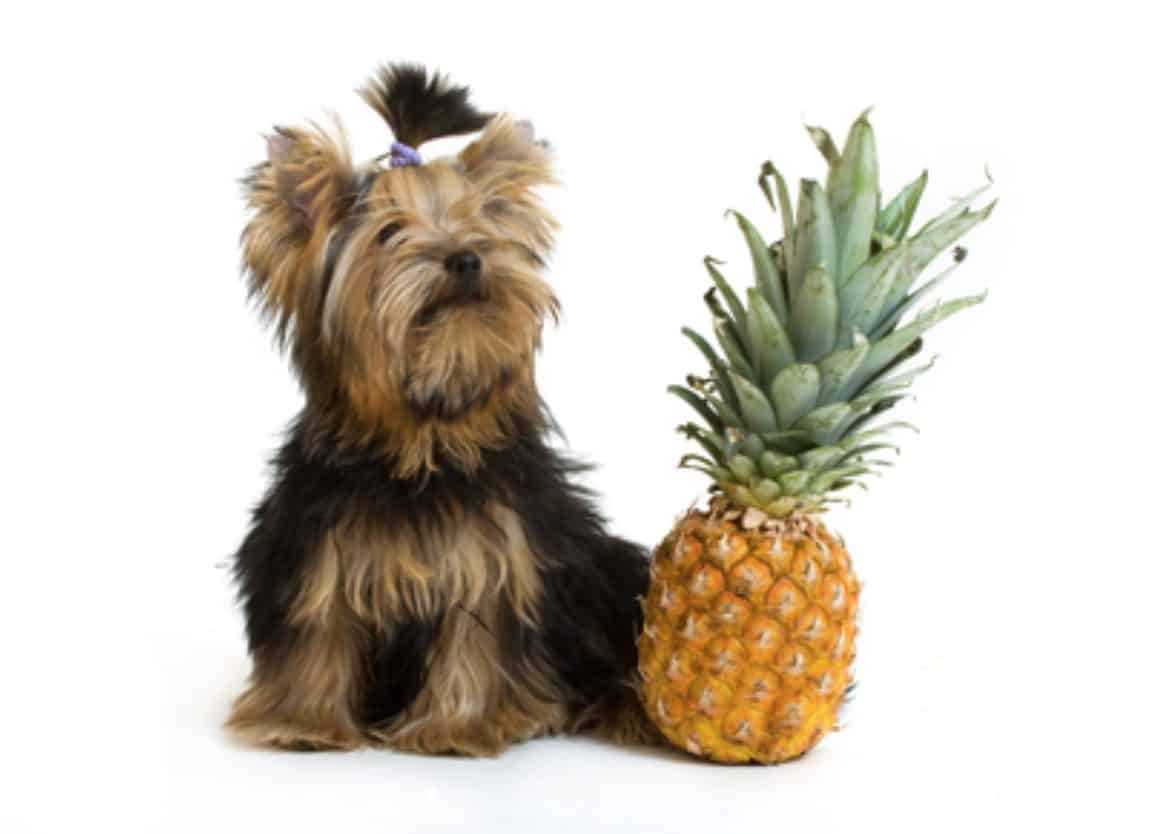 Mixing dogs and pineapples can lead to certain risks and potential side effects.