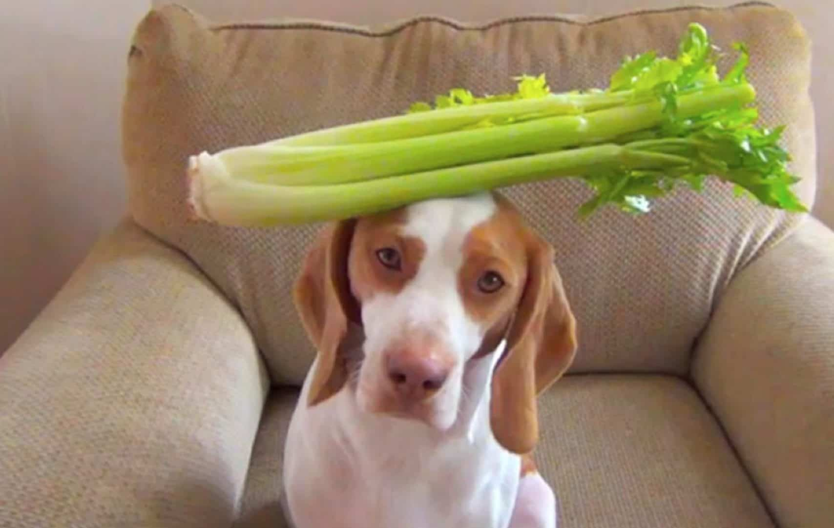 Can Dogs Eat Cucumbers? - Side Effects, Health Benefits & Tips