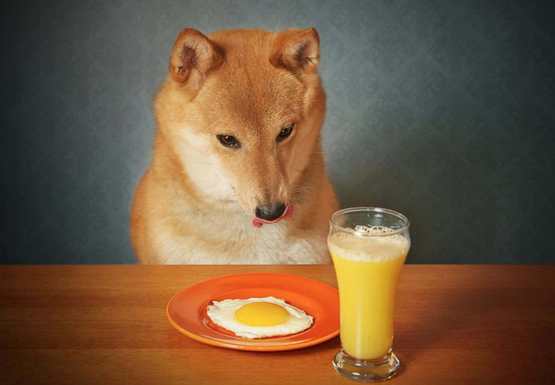 Can dogs eat eggs? And, are eggs safe for dogs?