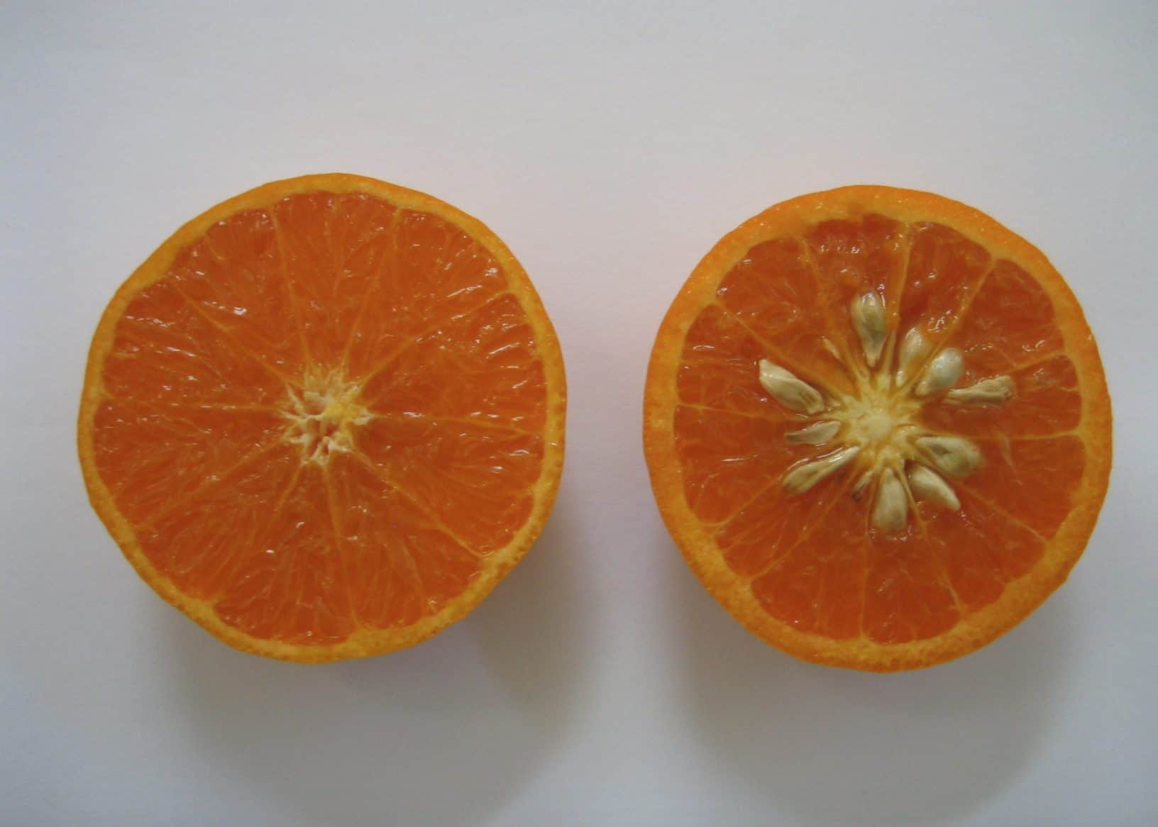Dogs can not eat orange seeds because it could block their intestinal tracts.