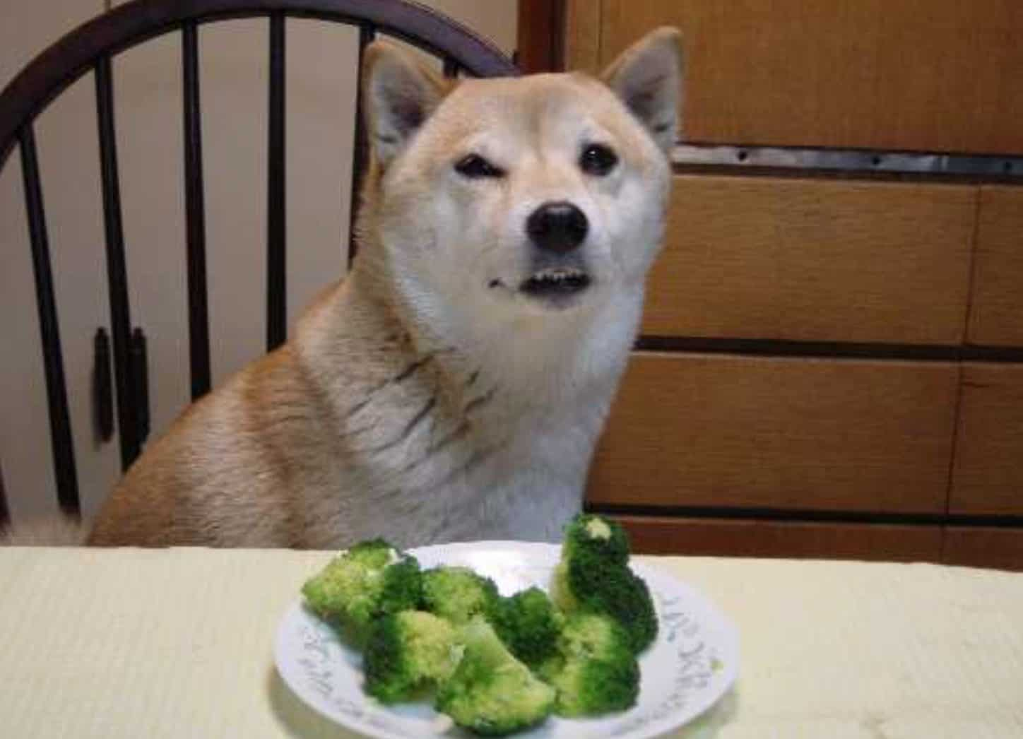 There may be several risks and side effects if your dog eats too much broccoli.