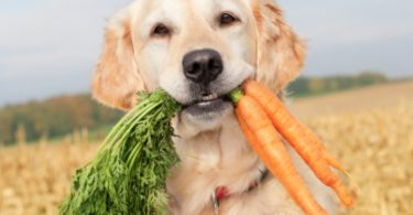 Can dogs eat carrots? The short answer: yes.