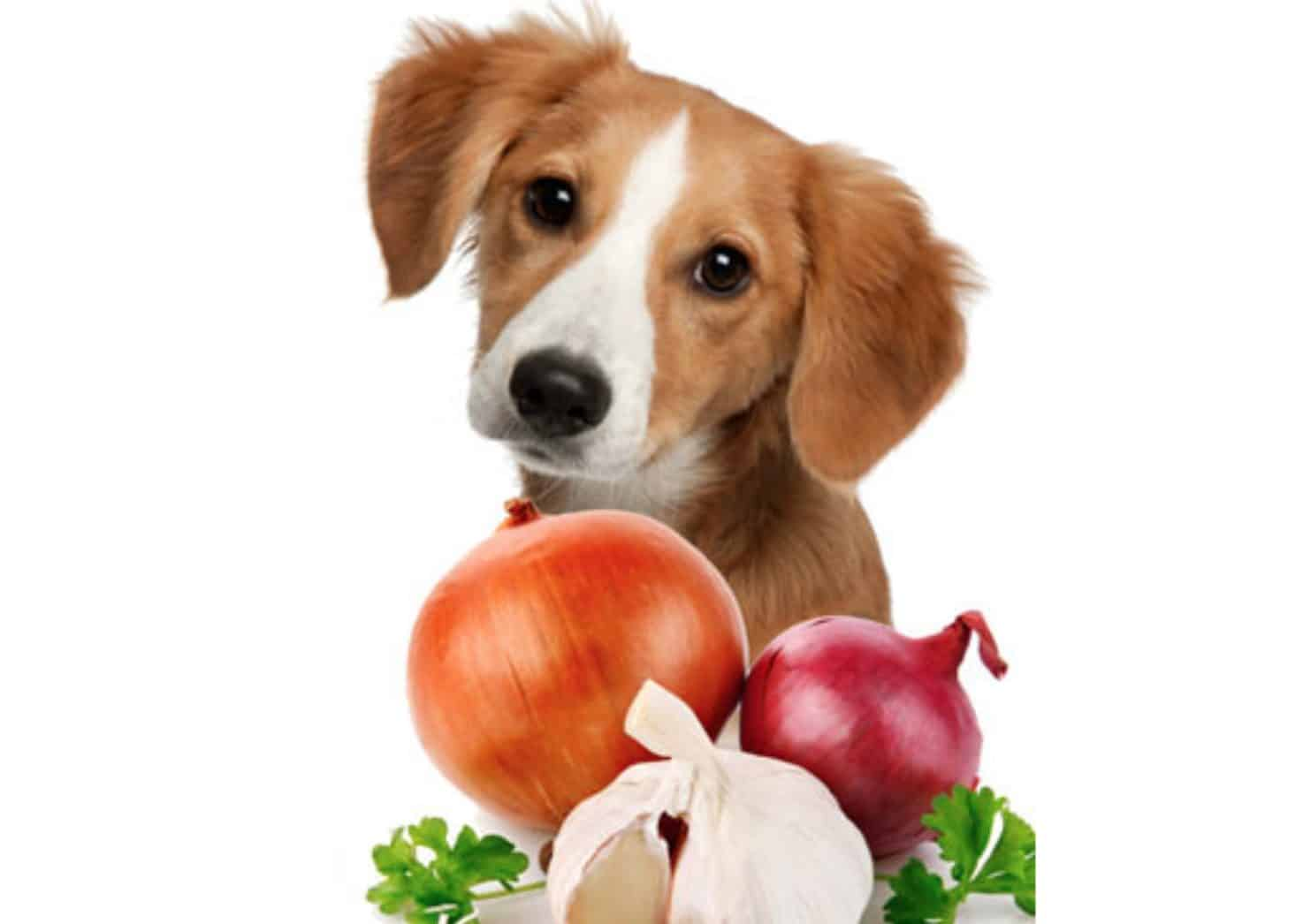 There are tons of risks and side effects that may occur if your dog eats enough onions.