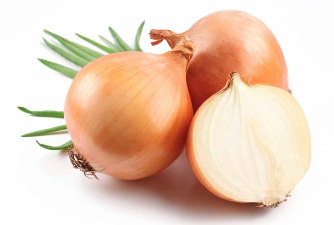 Dogs can't eat onions because they contain Thiosulfate, which can't be digested by dogs.