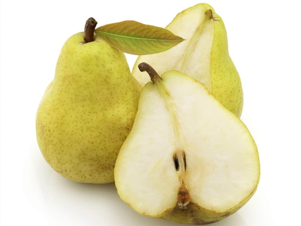 Dogs eating pears may not provide the best health benefits, but there are some.