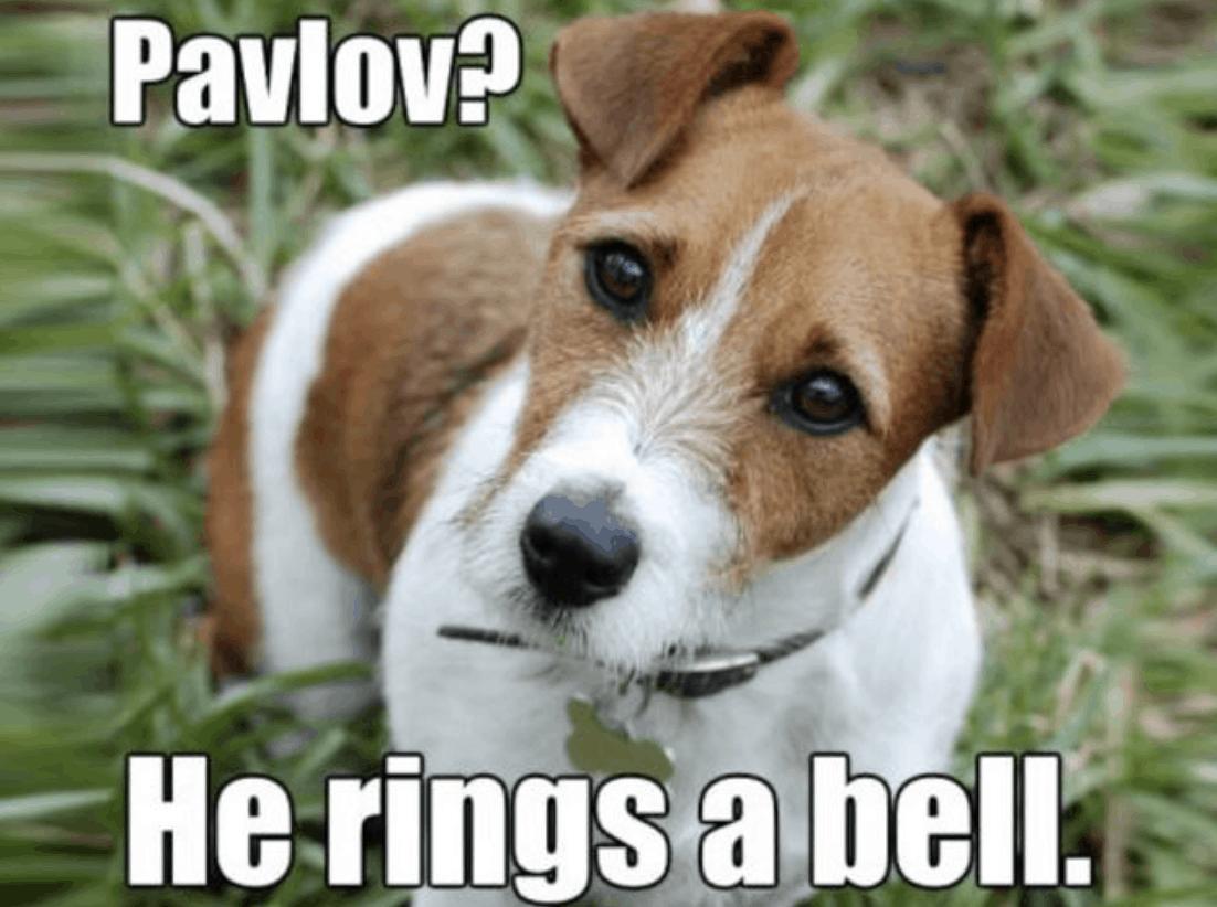 100 Funniest Dog Jokes of the Internet (FUNNY DOG HUMOR)