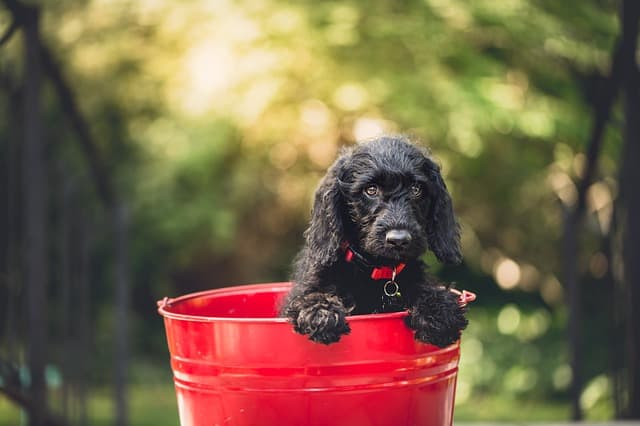Veterinary schools can be a great option in getting cheap puppy shots.