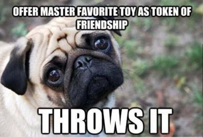 100 Funniest Dog Jokes Of The Internet Funny Dog Humor