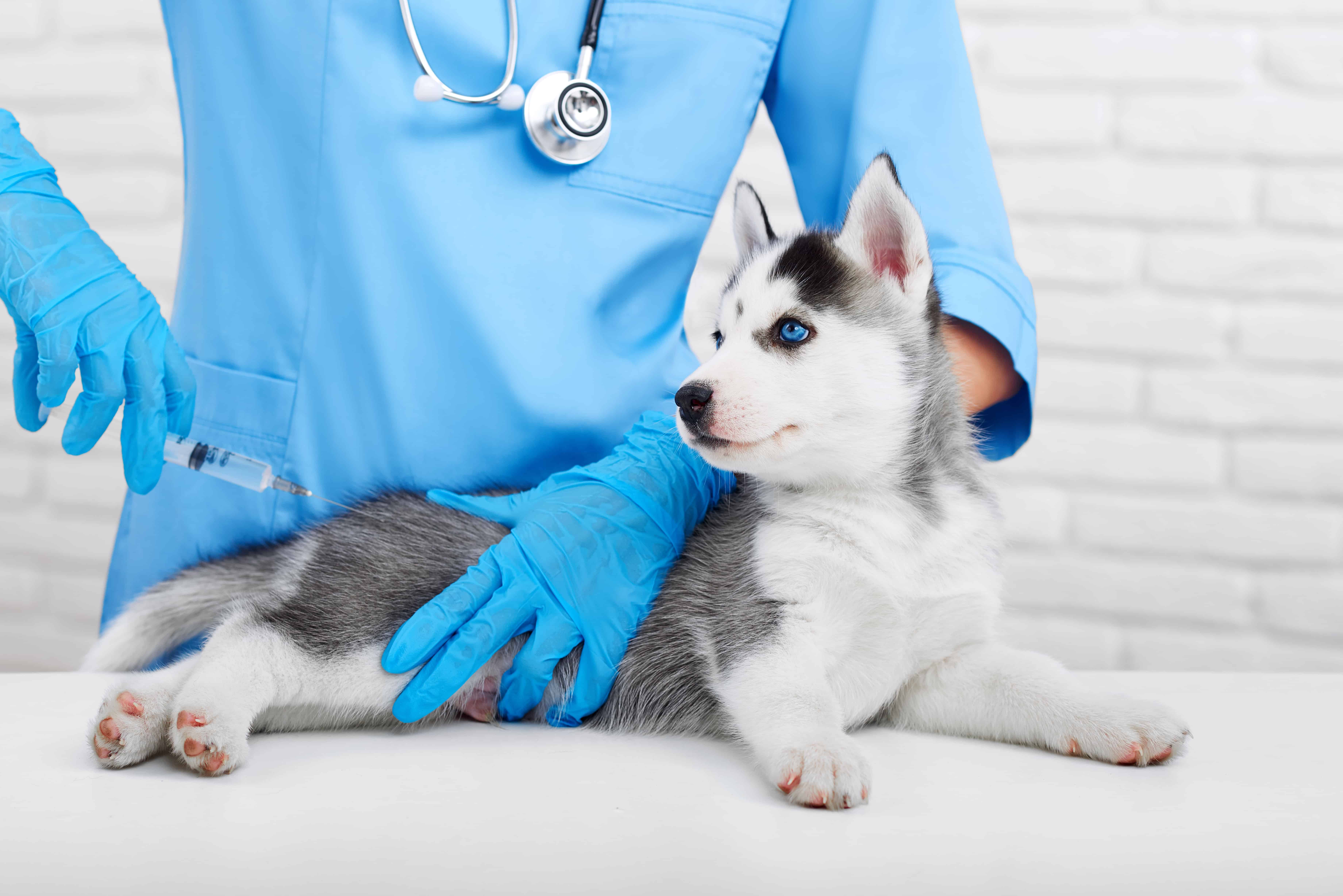side effects of bordetella vaccine in dogs