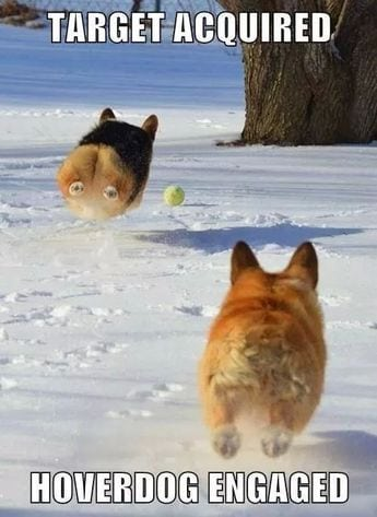 Hover corgi trying to catch a ball.