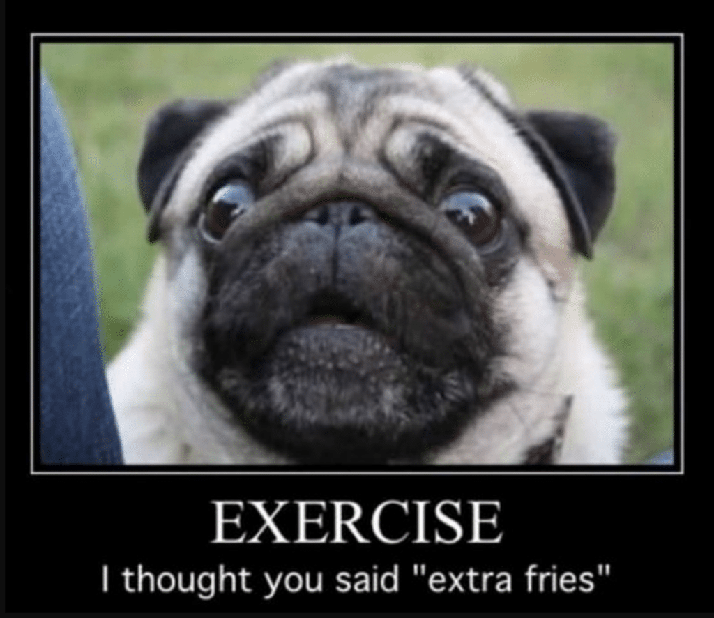 The pug thought you said extra fries!