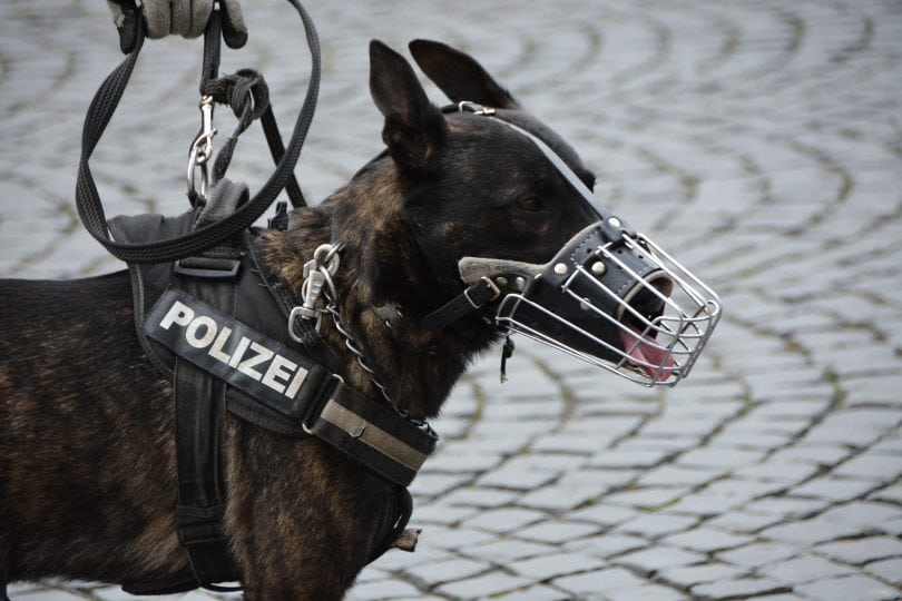 Police and military dogs are used all around the world.