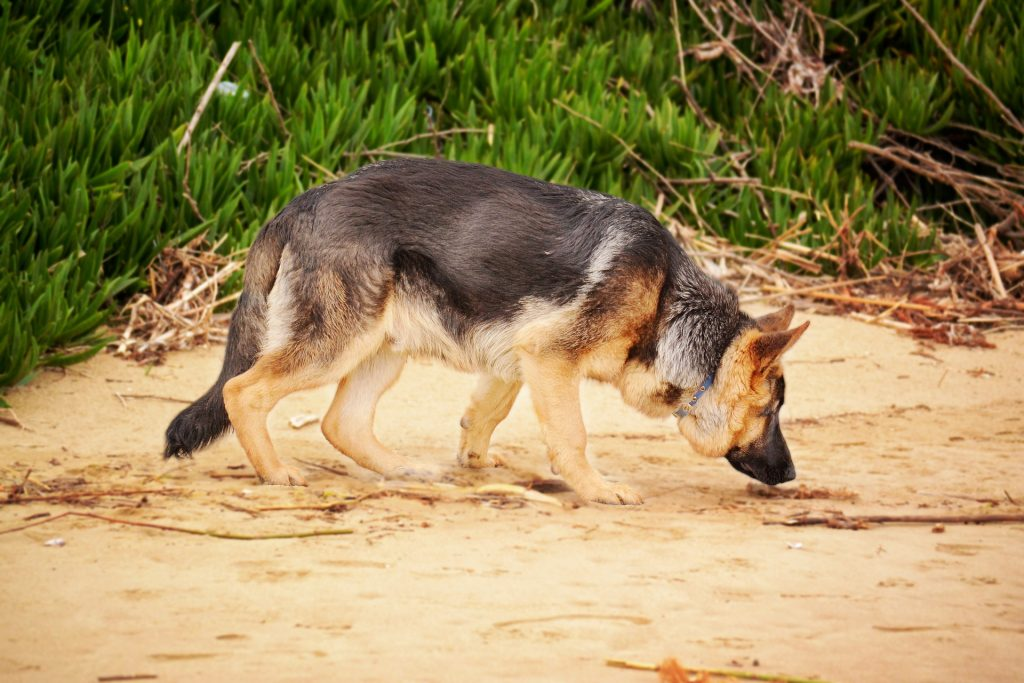 7 Shocking Reasons Why Dogs Eat Poop And How To Stop It