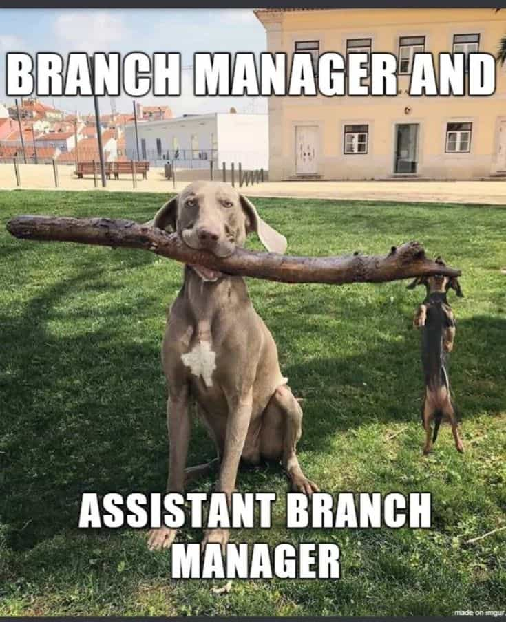 Who told the dog branch manager he could have an assistant?