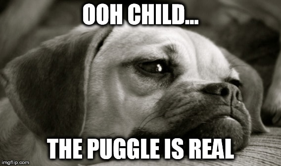 The struggles of a pug.