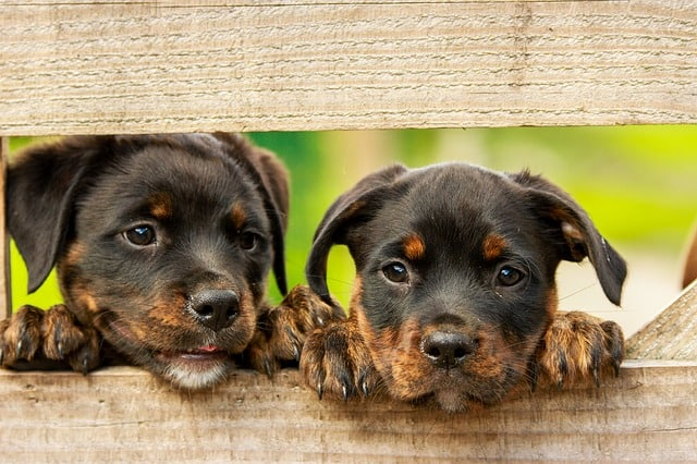 Discover 100 amazing and interesting dogs facts perfect for kids.