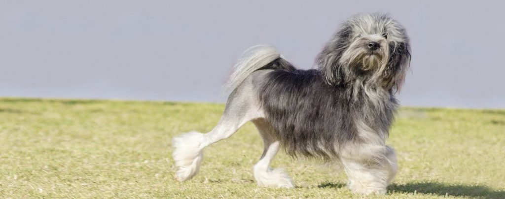 24 French Dogs More Charming Than Paris (DOGS OF FRANCE)