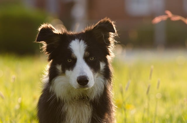 100 Smartest Dog Breeds The Guide To