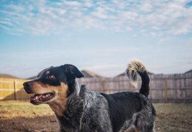 & Amazing Australian Dog Breeds from Down Under