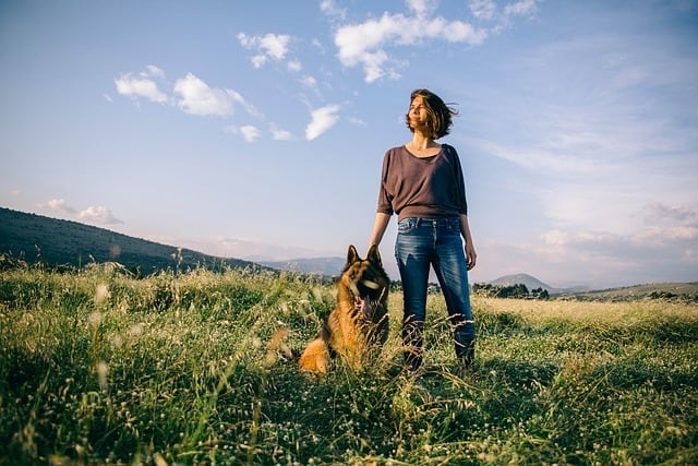 German Shepherds can live in apartments if you meet these five basic needs of the dog.