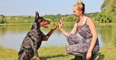 Are Dobermans good with children? Let's investigate how great these dogs are with kids.