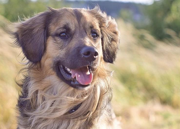 @happy_dog_sunny