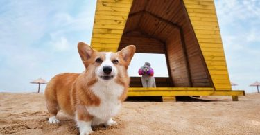 Do Corgis get along with children? Yes!