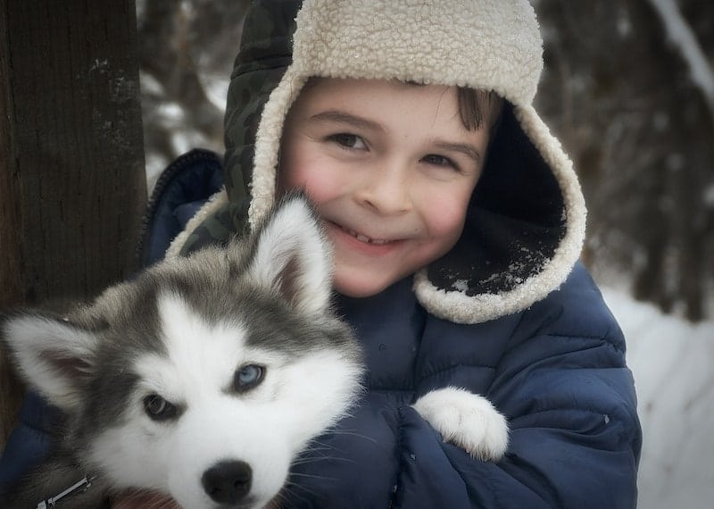 A parent's guide to raising kids with Siberian Huskies.