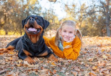 A loving Rottweiler playing with a kid in the park.