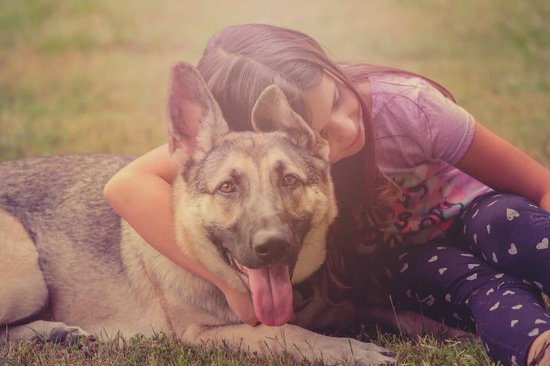 A child playing with her German Shepherd.