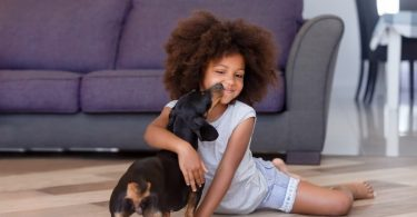 A young dachshund happily playing with a child.